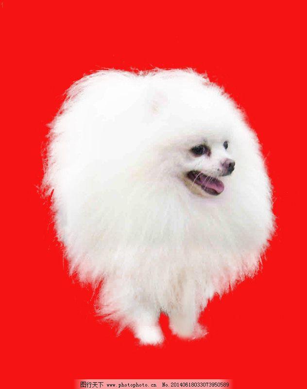 白色小狗抠图