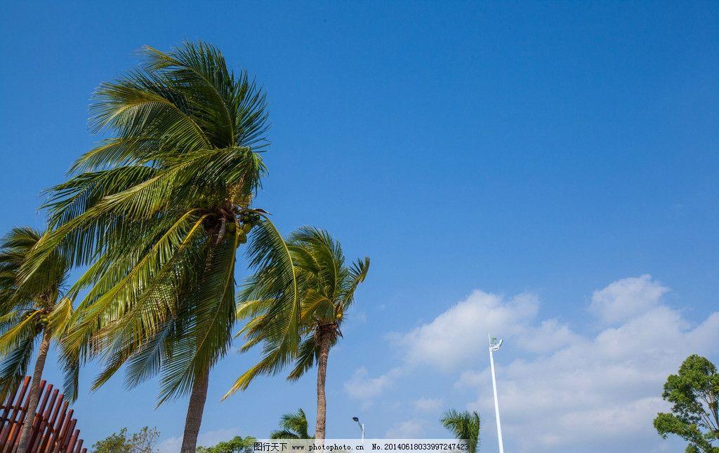 海南景点 旅游景区 海南自然风光 椰树 天空 海南岛风光片 山水风景