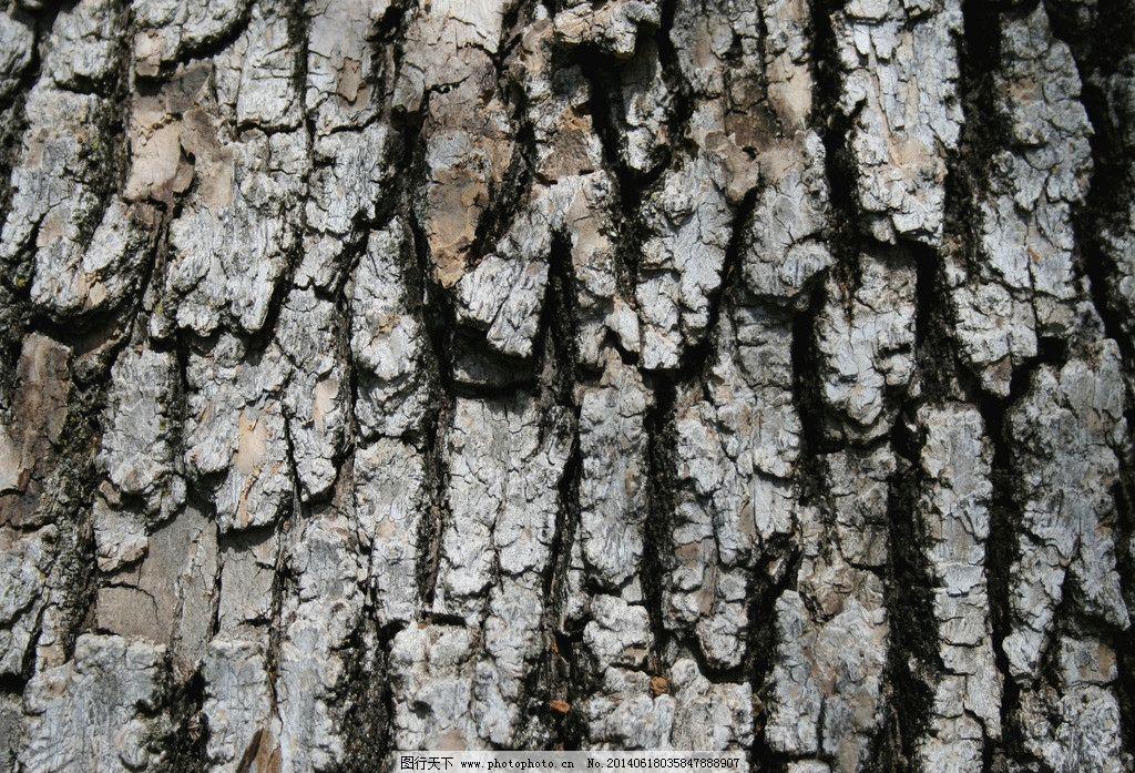 树木树叶  树皮贴图