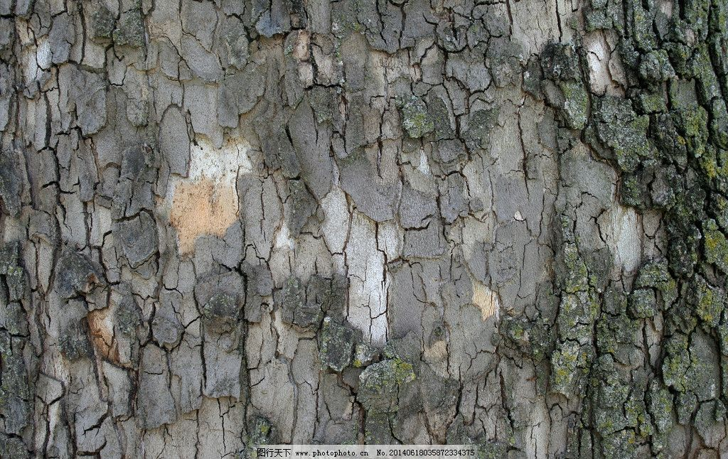 树皮贴图图片