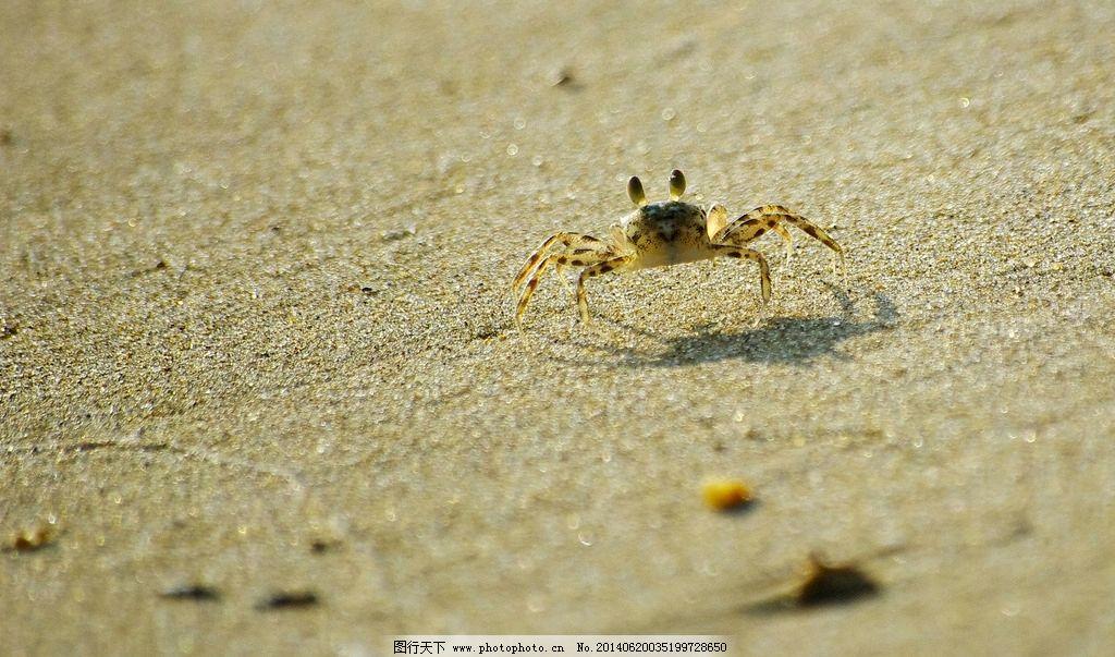 螃蟹 海蟹 蟹 沙滩 海边 动物 海洋生物 生物世界 摄影 72dpi jpg