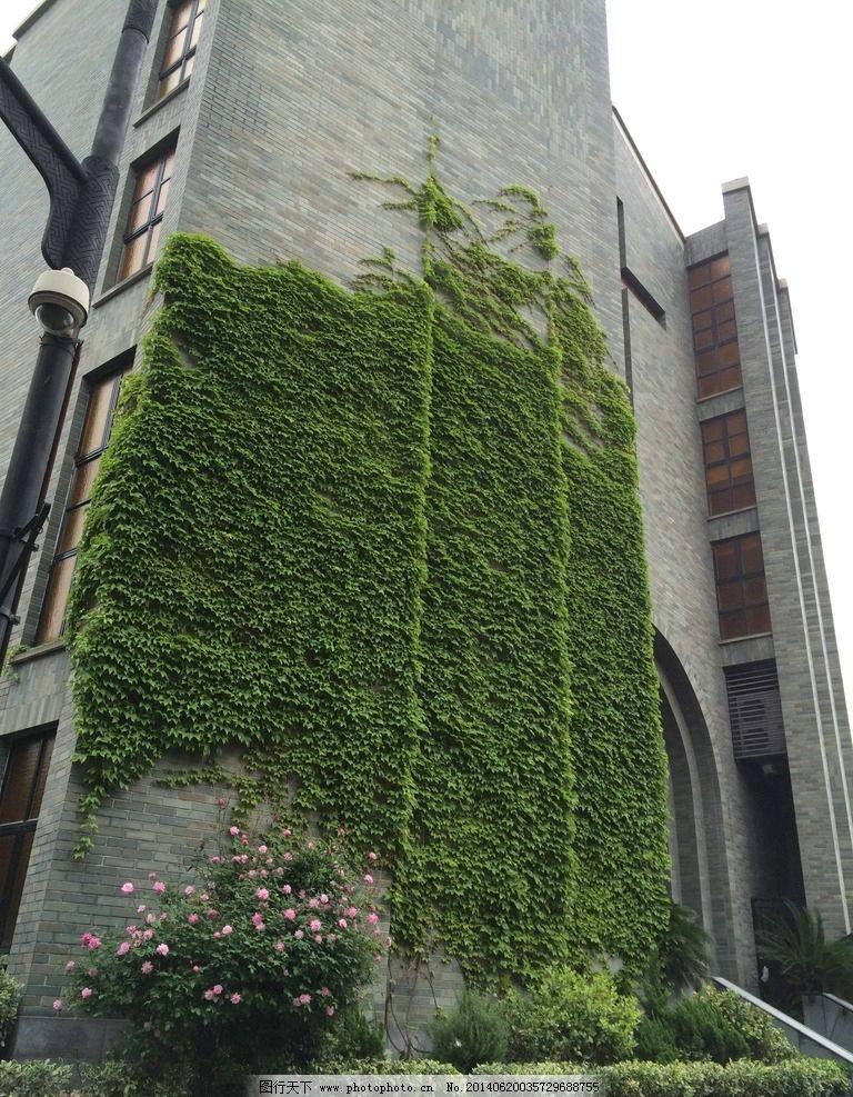 爬山虎 建筑 爬山虎摄 影 藤蔓植物 古建筑 花草 生物世界 摄影