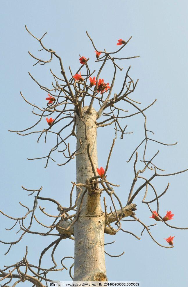 手绘树与鸟