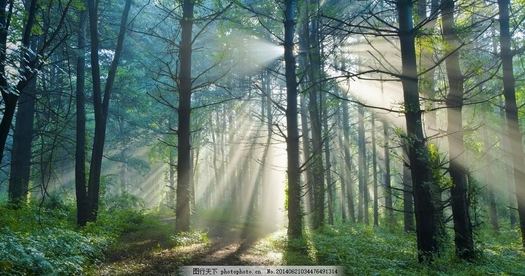 晨起的森林 早晨 光束 背景 梦幻 树林 摄影