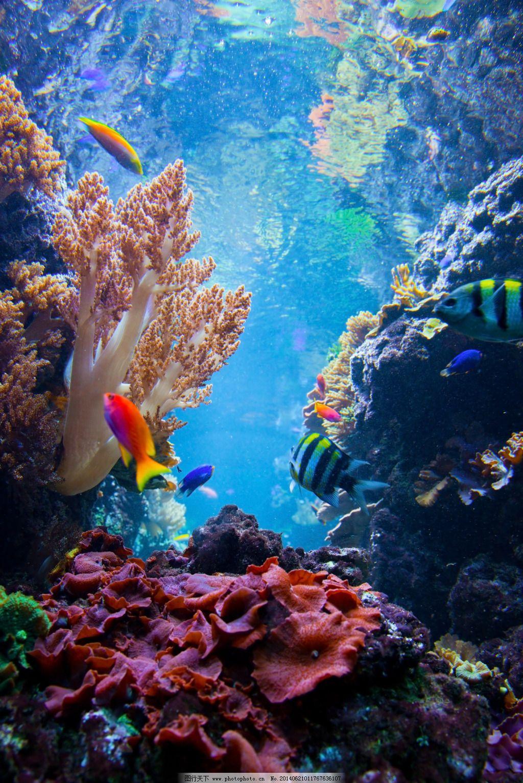 海底世界免费下载 3d立体画 海底世界 海洋 海底世界 海洋 3d立体画图片