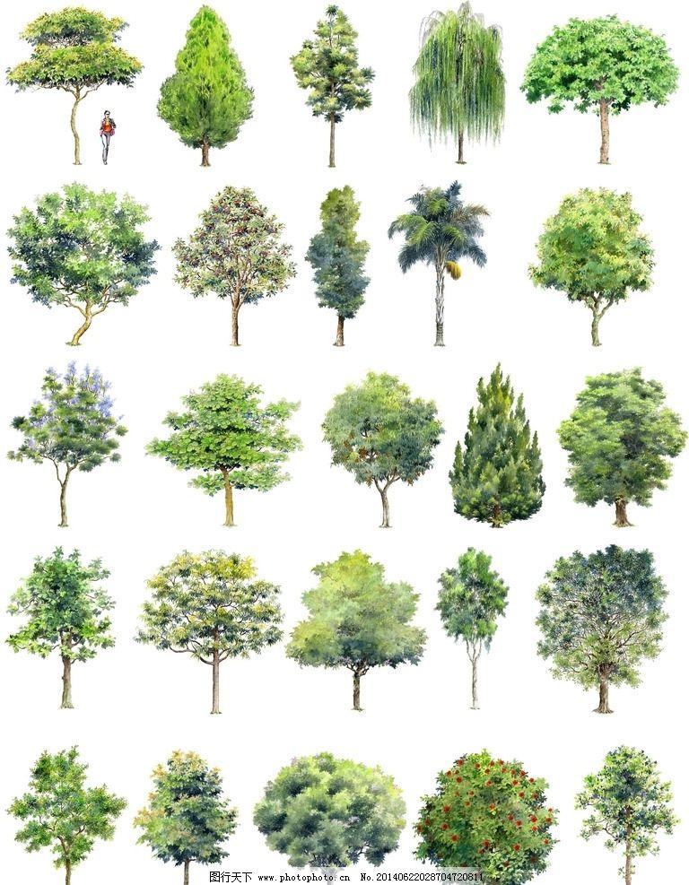 形意素材 彩绘设计 园林设计素材 手绘园林设计 手绘树木 建筑设计