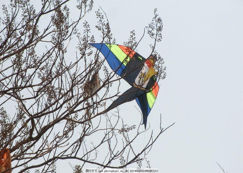 树上风筝图片
