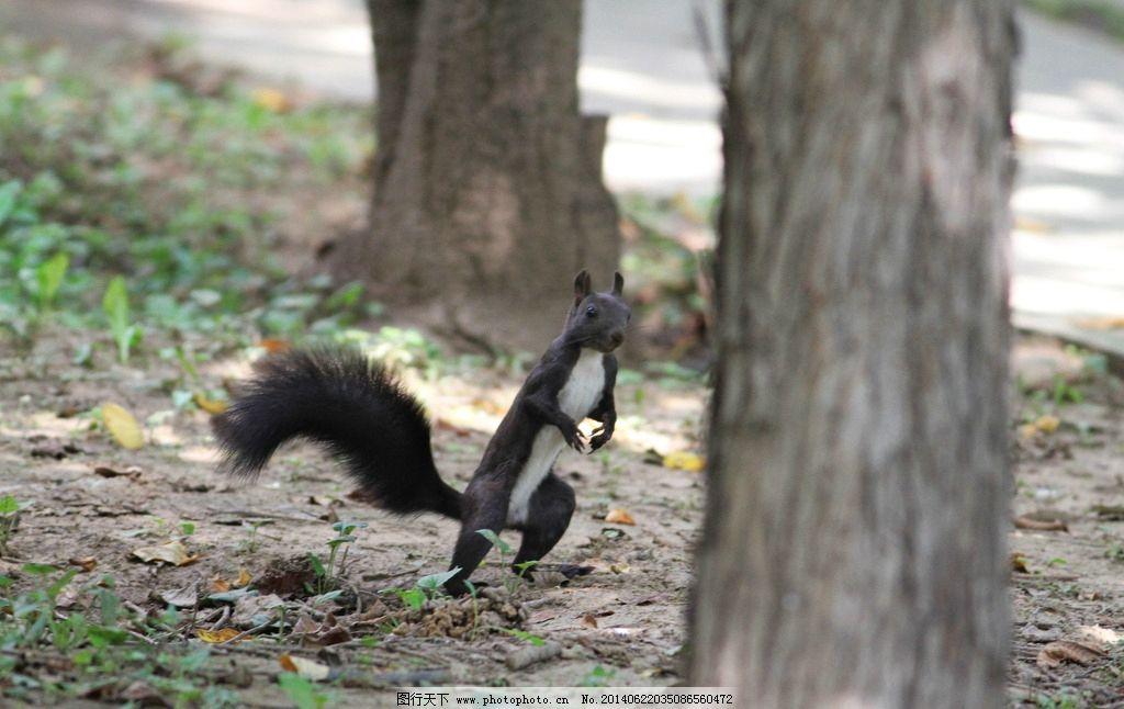 可爱的小松鼠 松鼠 野生松鼠