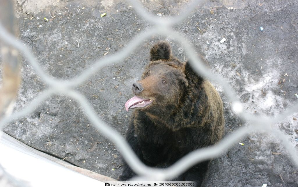 狗熊 熊 馋嘴 嘴馋 饥饿 熊大 熊二 熊出没 动物 野生动物 生物世界