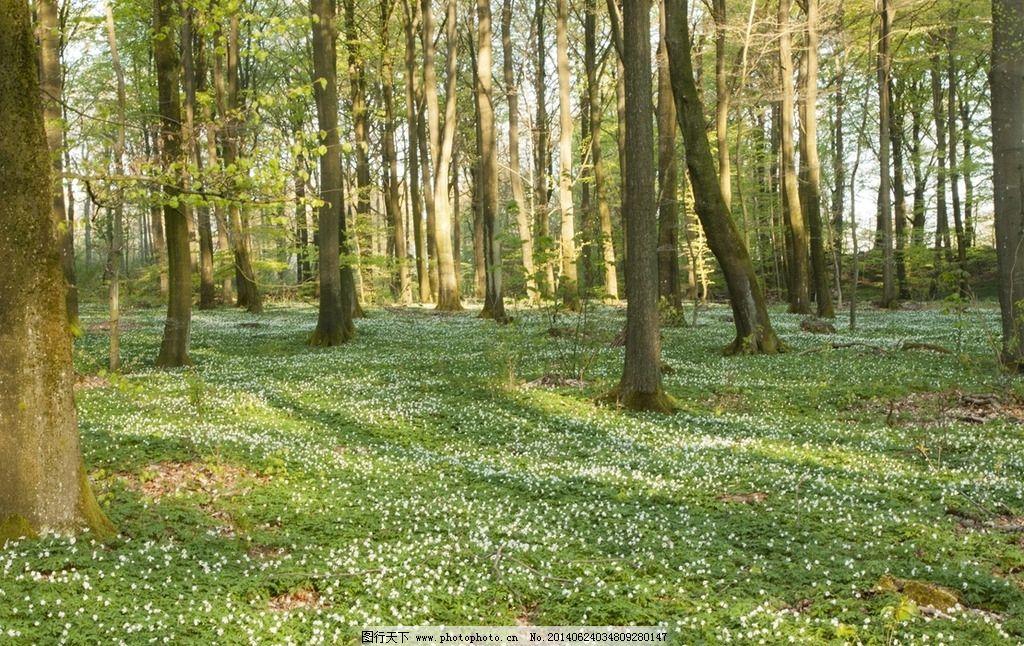 森林 树林 树木图片