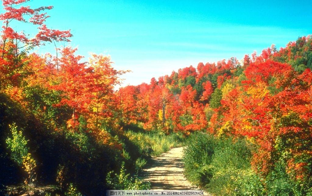 秋天红叶图片图片