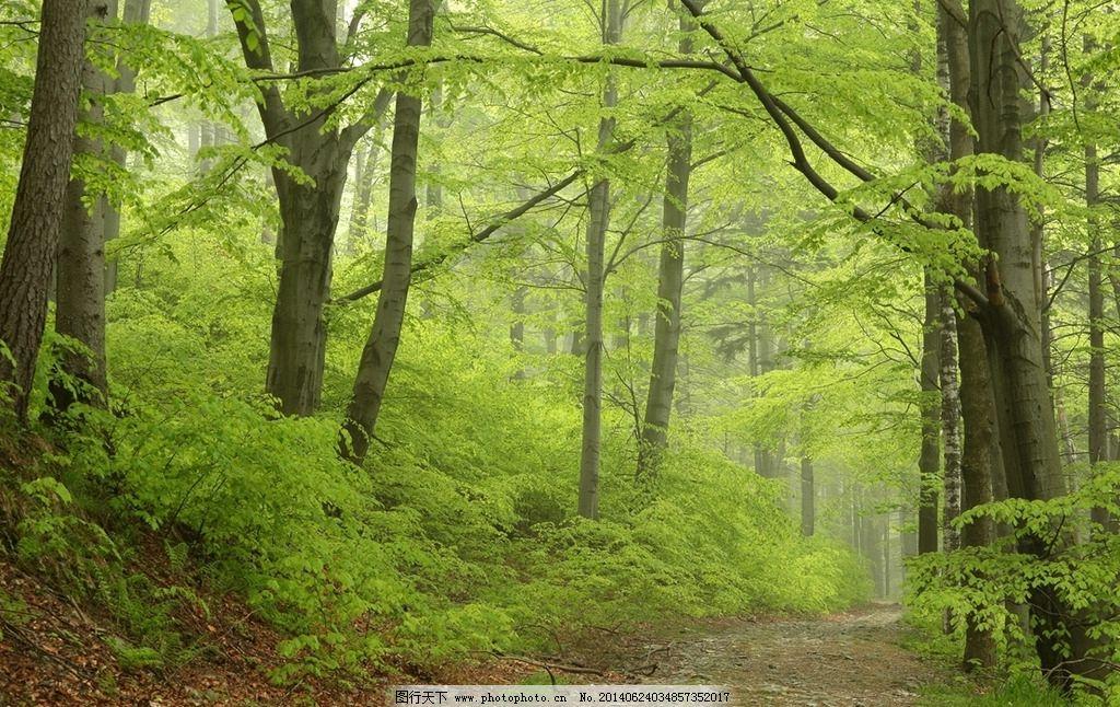 森林 树林 树木 原始森林 大森林 大树 自然 自然环境 自然风景 绿色