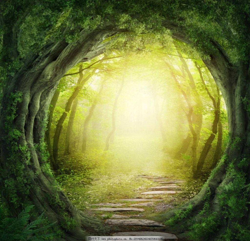 森林 树林 树木 原始森林 大森林 大树 自然 自然环境 自然风景