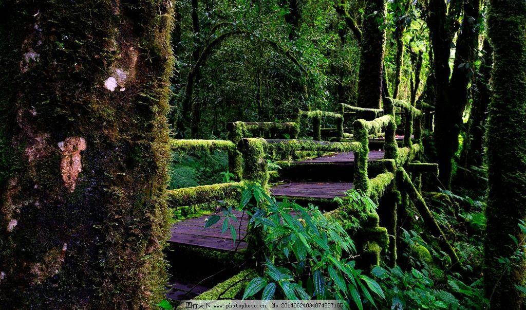 自然森林 山间流云 欧州风景 夜晚天空 自由行 自然夜景 自然风景