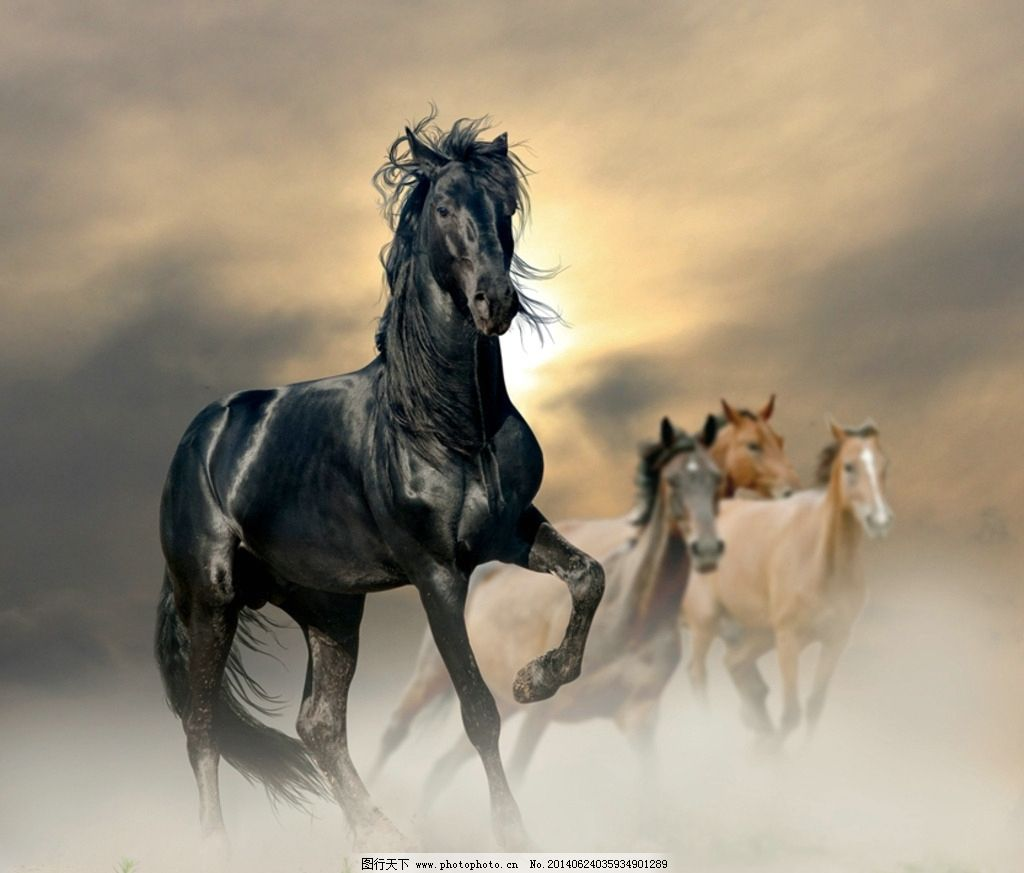骏马 马匹 神马 动物 马 奔跑 驰骋 家禽家畜 生物世界 摄影 300dpi