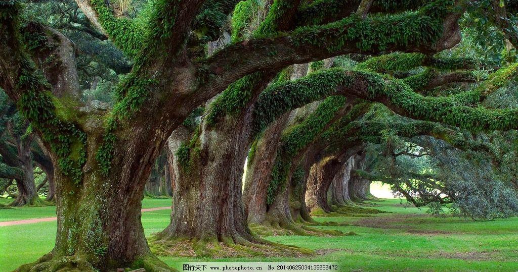 大树 树木 树林 森林 老树 绿色风景 自然风景 旅游摄影 摄影