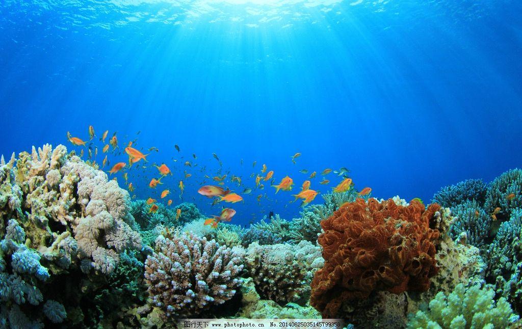 海底世界 海底 海底素材 大海 海水 鱼群 海底世界图片 珊瑚 海洋
