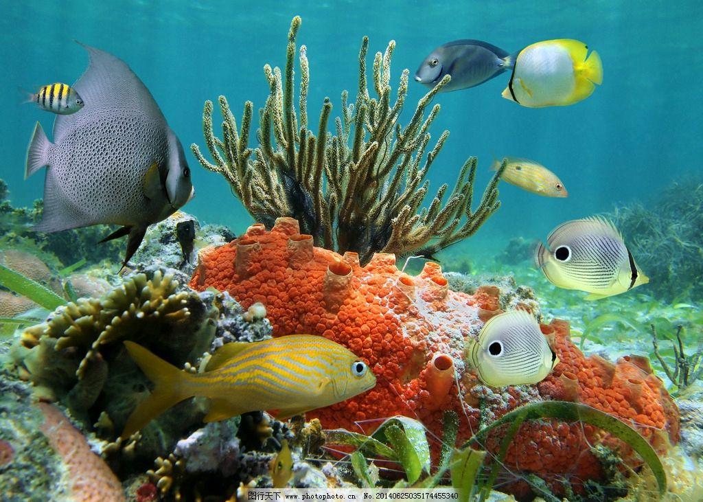 壁纸 动物 海底 海底世界 海洋馆 水族馆 鱼 鱼类 1024_731