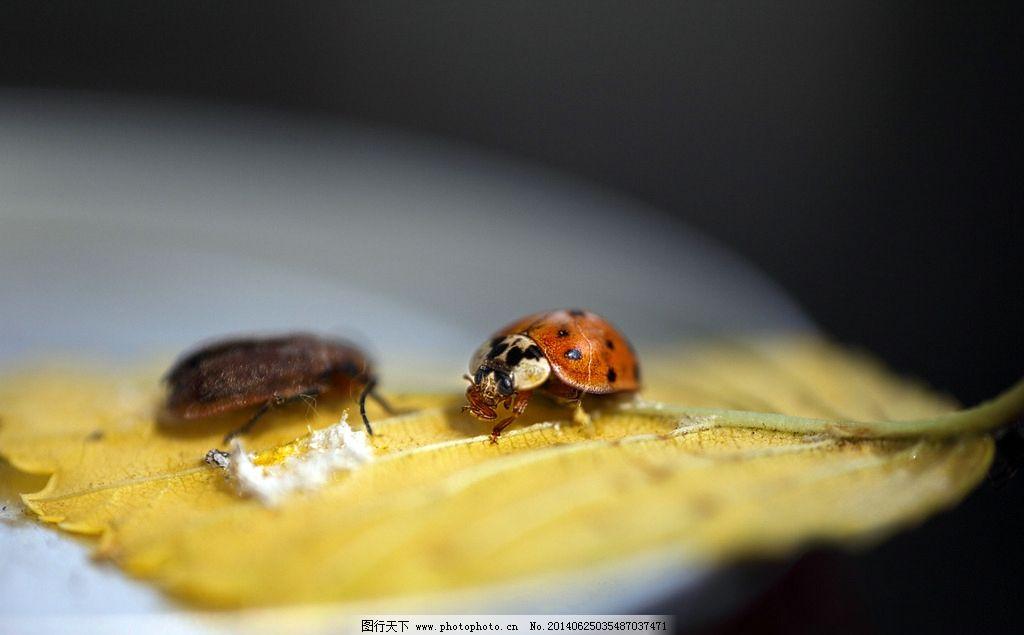 甲壳虫 甲虫 节肢动物 生物 昆虫世界 摄影