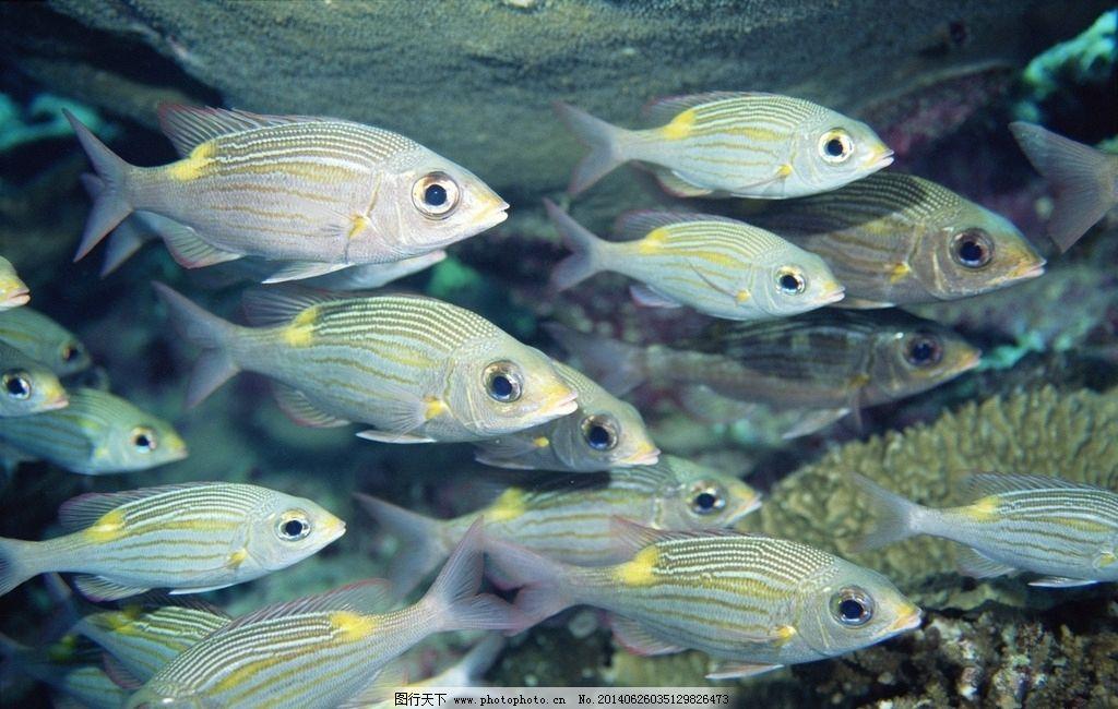 壁纸 动物 海底 海底世界 海洋馆 水族馆 鱼 鱼类 1024_650