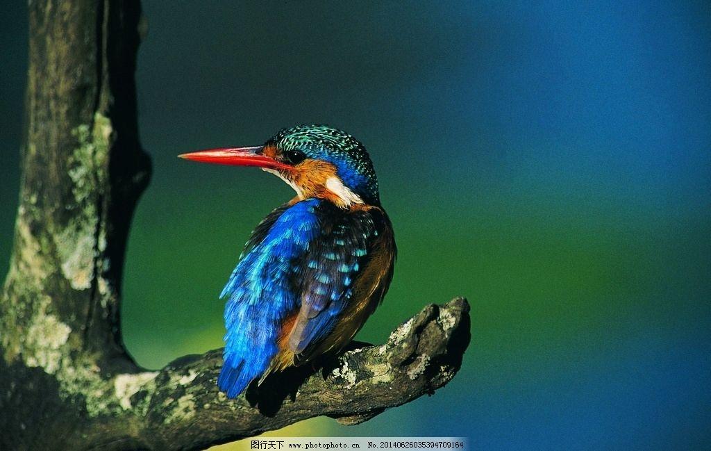啄木鸟 小鸟 森林医生 树枝 树干 飞禽 动物 摄影