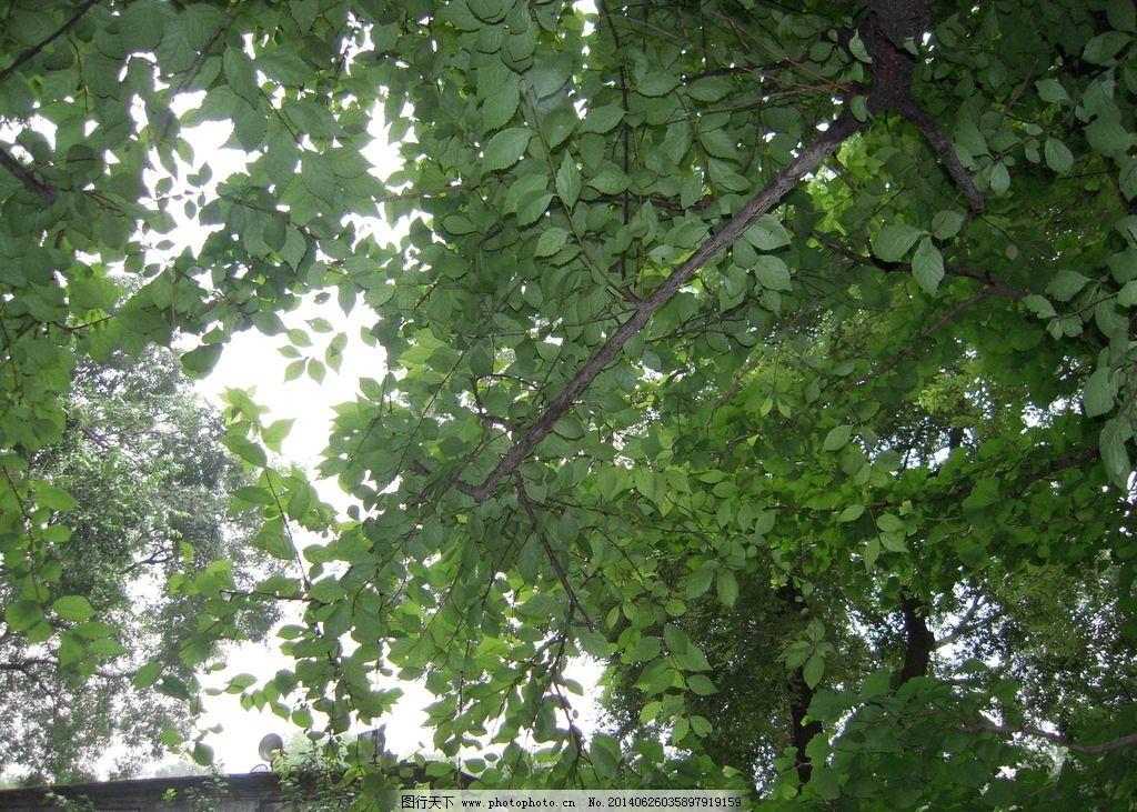 绿色植物 植物 树木 树木树叶 树叶 大树 参天大树 大自然 生物世界