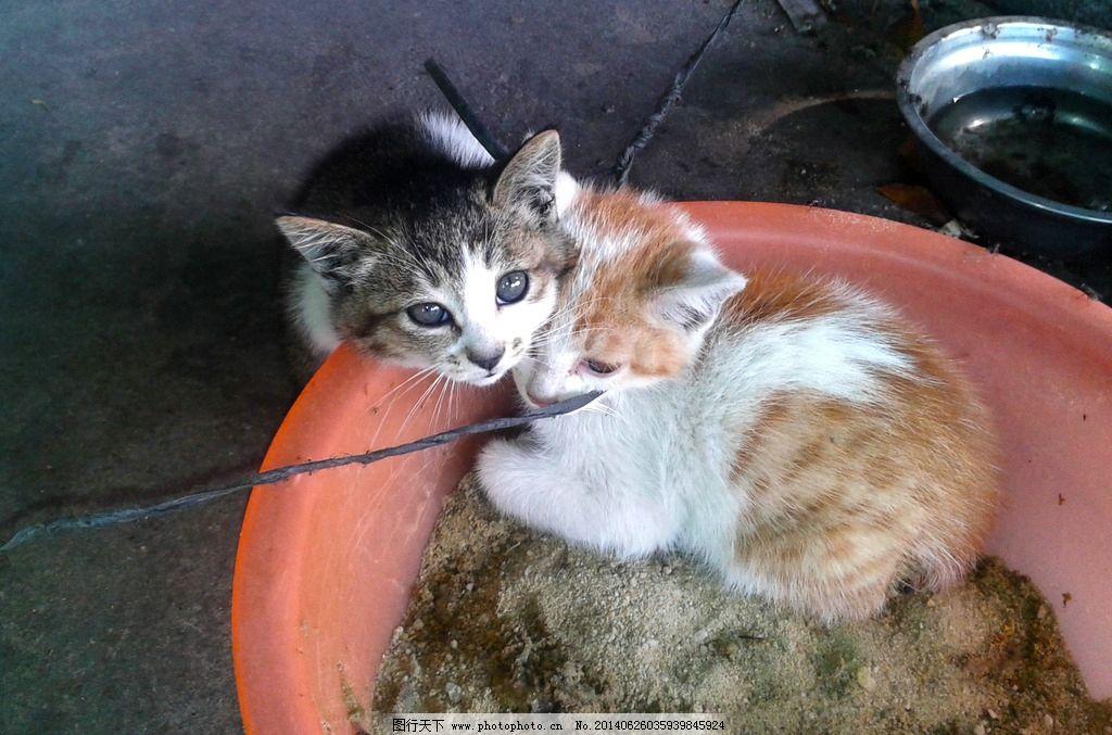 可爱猫咪 小猫 猫咪 喵星人 可爱小动物 猫猫 家禽家畜 生物世界 摄影
