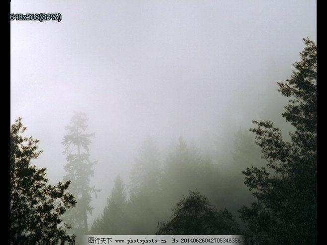 森林水雾免费下载 森林 水雾 雾气 森林水雾 实拍森林水雾视频下载 水