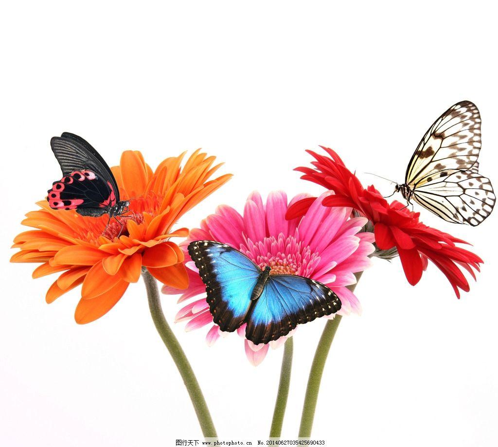 蝴蝶 鲜花 翅膀 动物 自然 昆虫 生物世界 摄影 300dpi jpg
