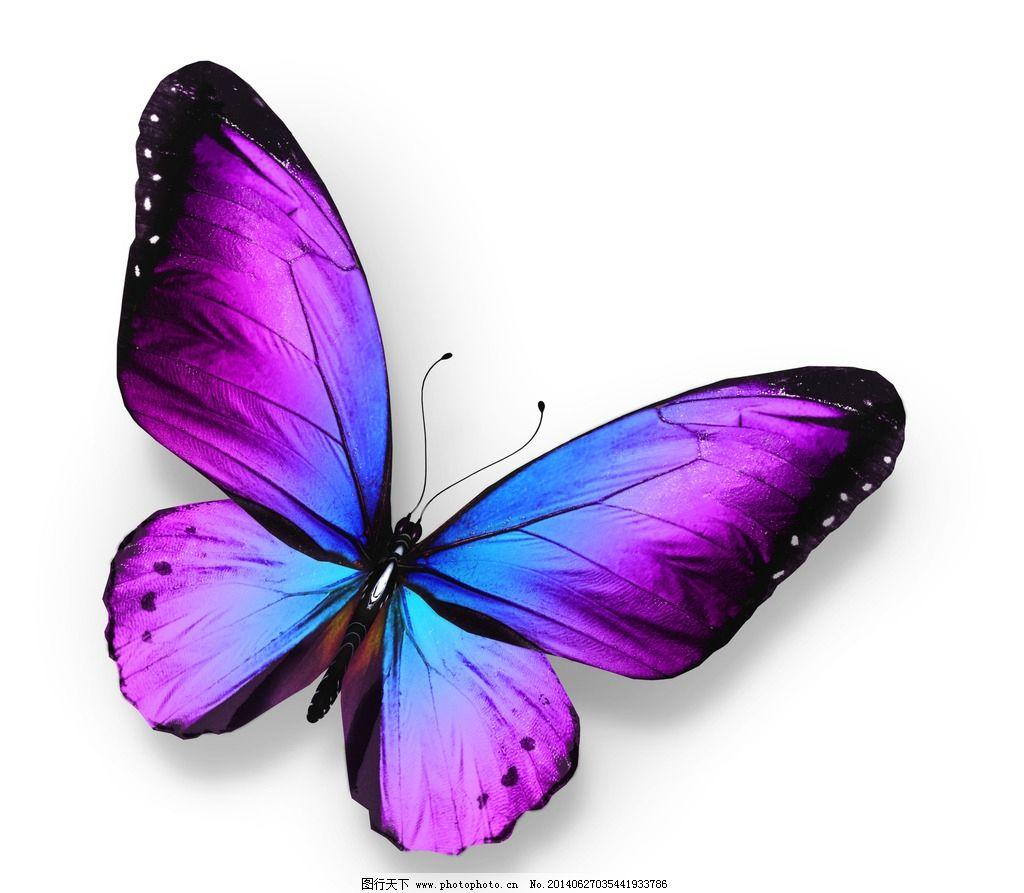 蝴蝶 翅膀 动物 自然 昆虫 生物世界 摄影 300dpi jpg