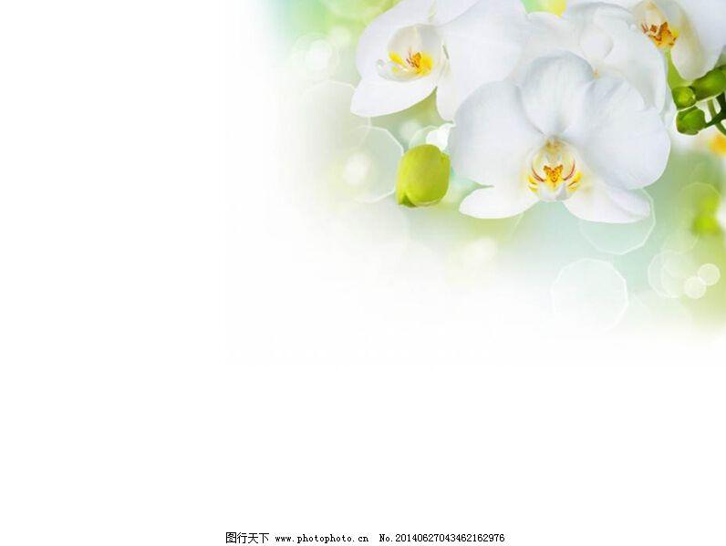 背景/淡雅白色蝴蝶兰幻灯片背景