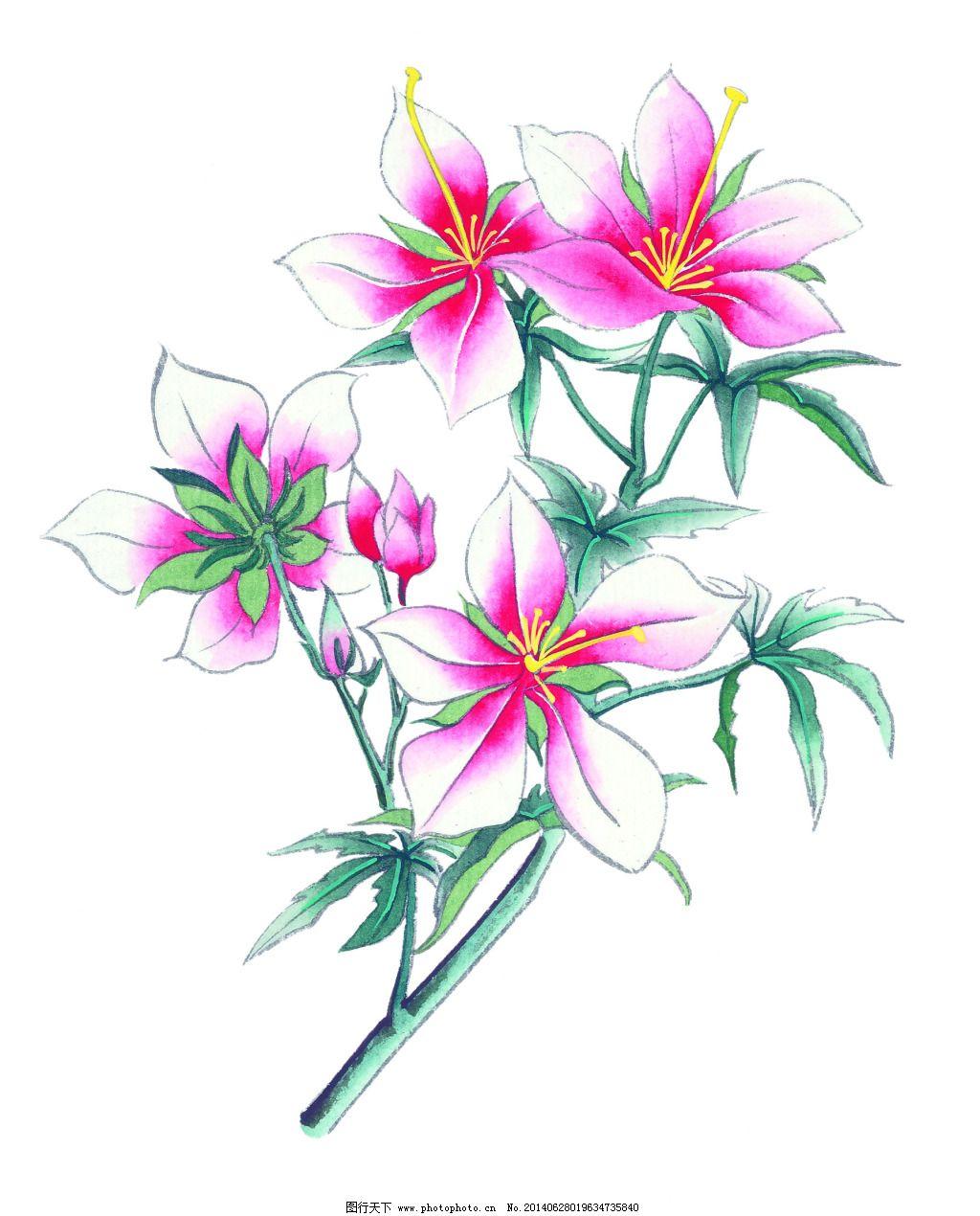 百合免费下载 百合 风景 工笔 花卉 花鸟 美术 设计 文化艺术 装饰画