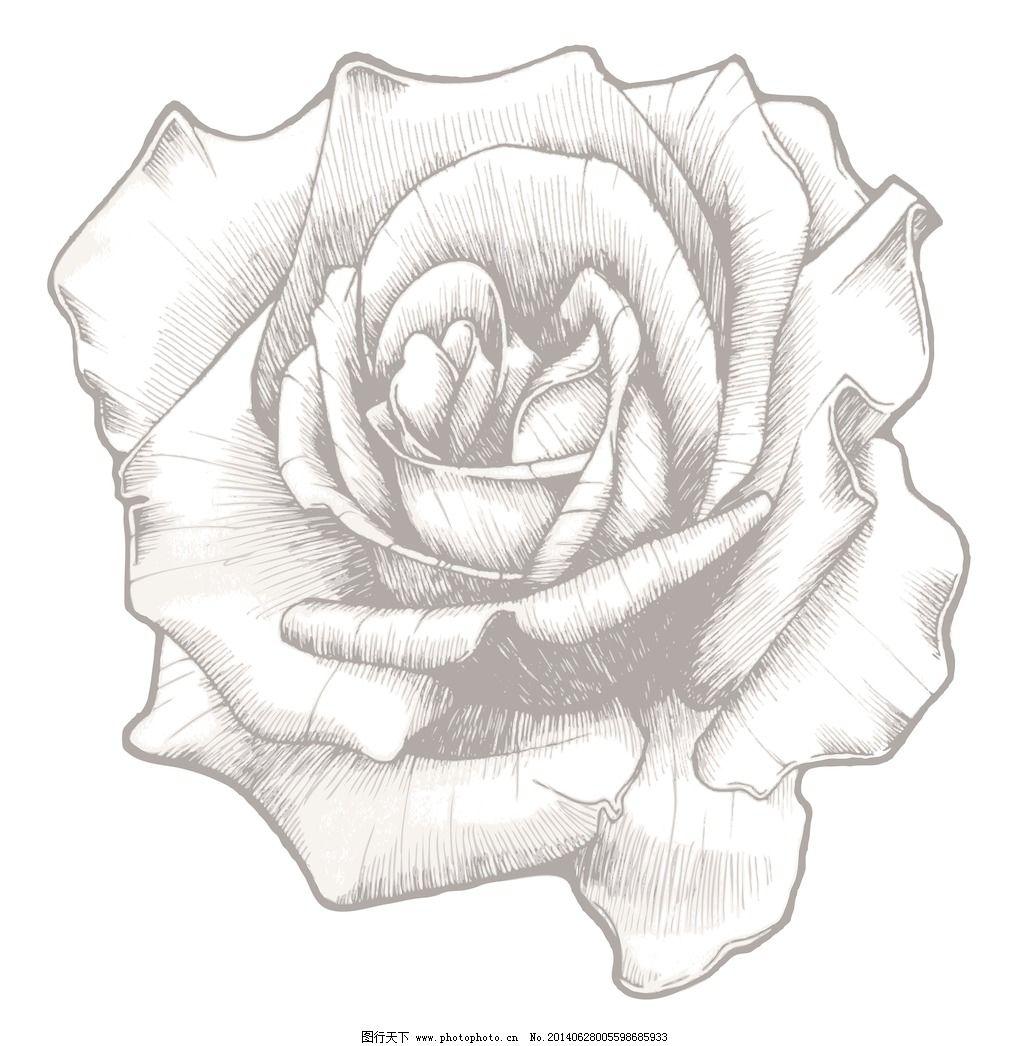 手绘玫瑰矢量插图