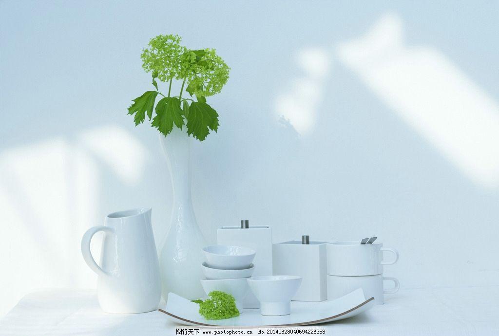 室内植物摄影图片