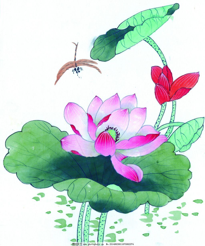 荷花 荷叶蜻蜓