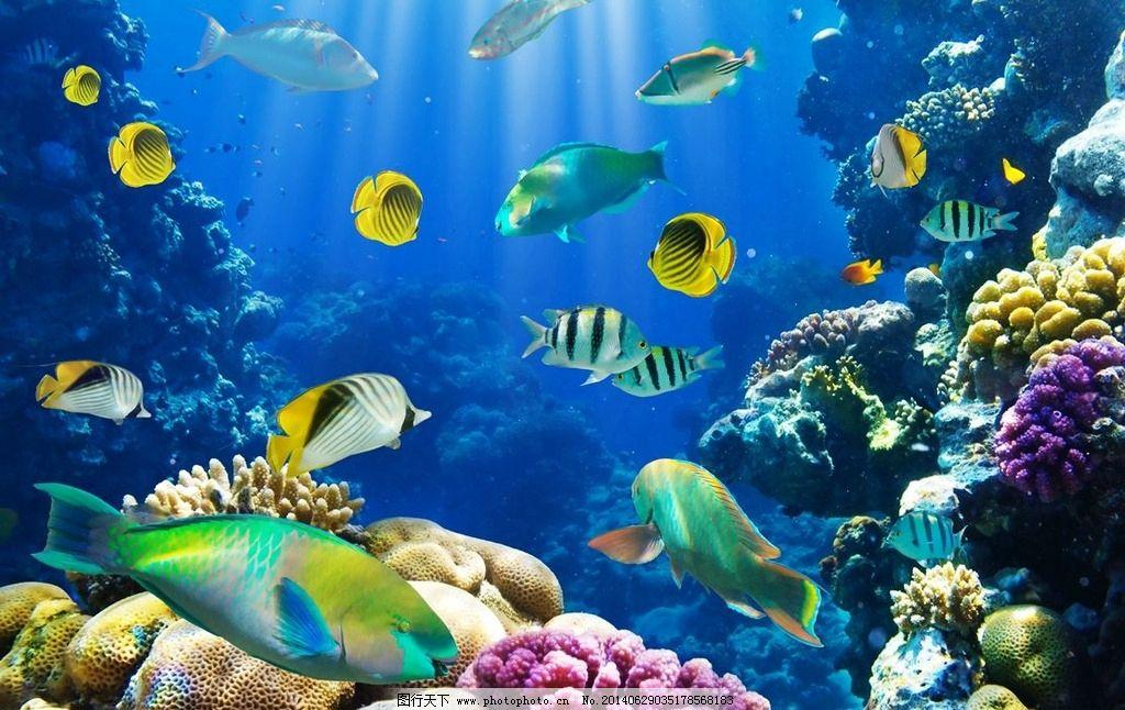 海底世界 海鱼图片