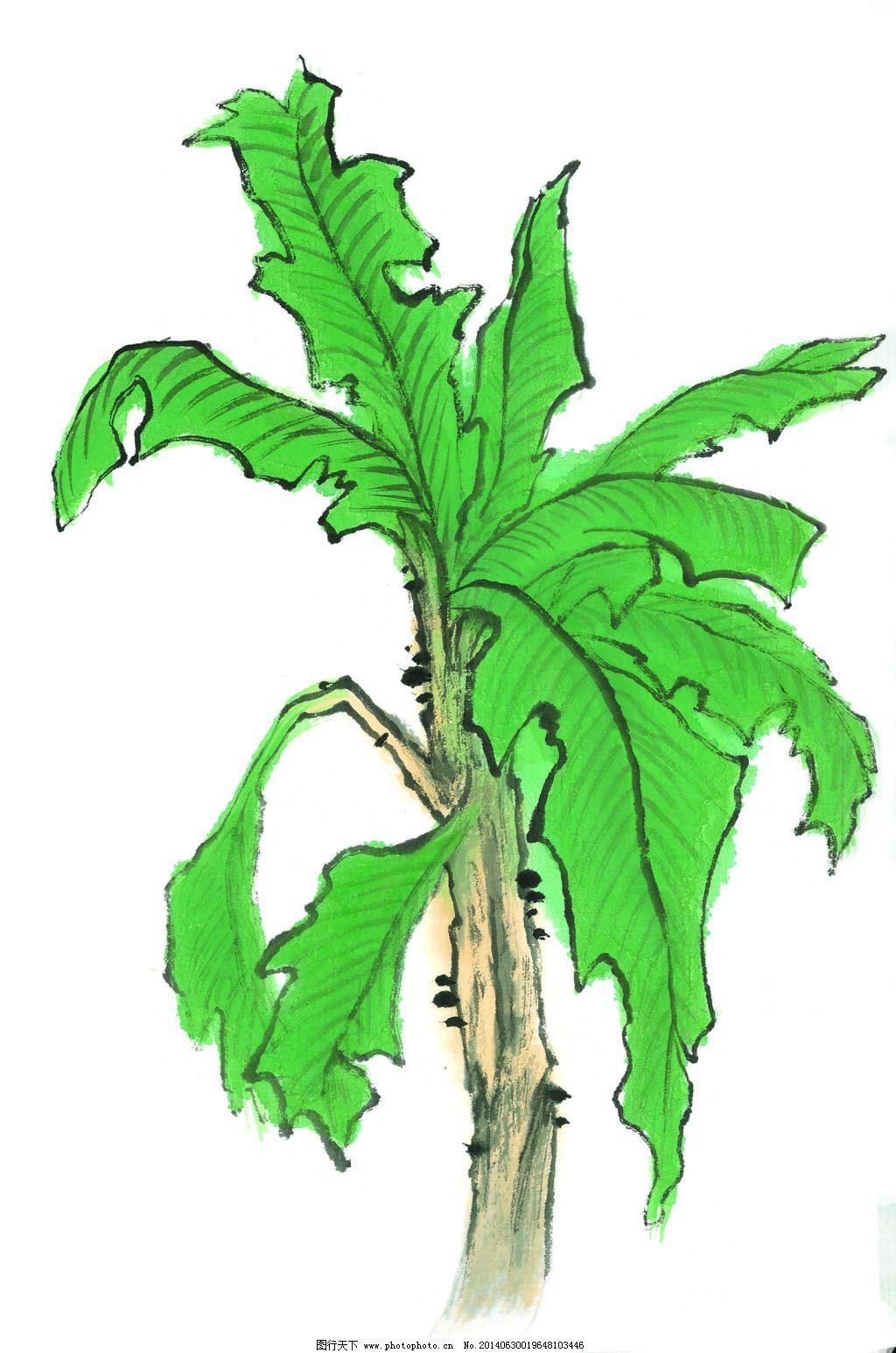 芭蕉树叶手绘简笔画