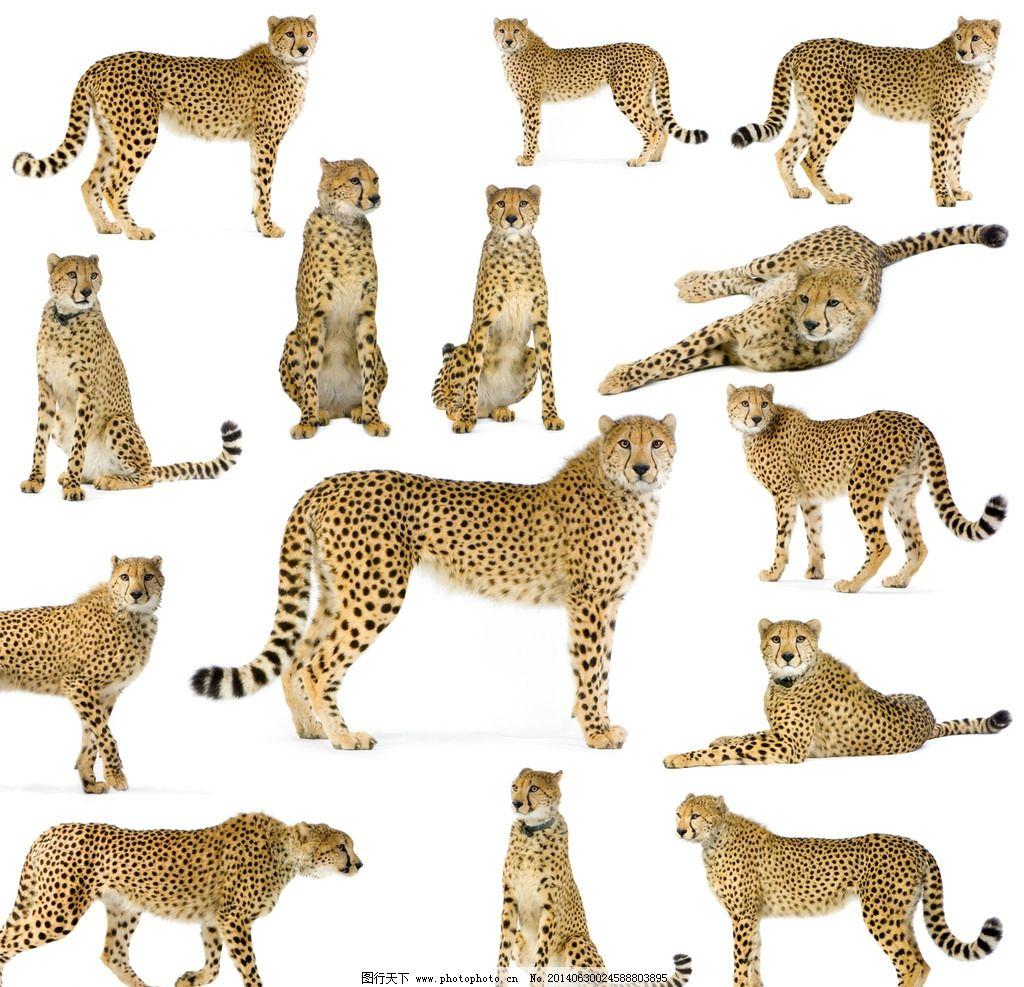 豹子怎么折步骤图片