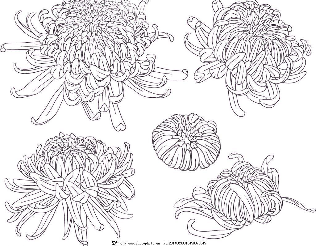 花卉 手绘花卉 花卉 矢量花纹 菊花 矢量花纹边框 手绘花朵 矢量素材